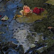 Blossom Rain 13 Poster