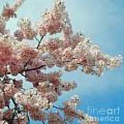 Blossom Sky Poster