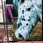 Blotter Poster