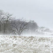 Blowing Snow Over Fields And Forest Poster