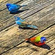 Blue And Indigo Buntings - Three Little Buntings Poster