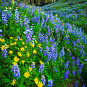 Blue And Yellow Hillside Poster