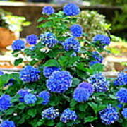 Blue At Bonaventure Poster