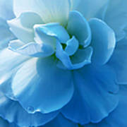 Blue Begonia Flower Poster by Jennie Marie Schell