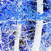 Blue Birch Trees Poster
