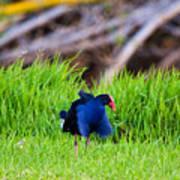 Blue Bird Park Poster