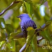 Blue Bird With A Yellow Throat Poster