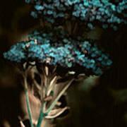 Blue Bouquet Poster