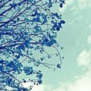 Blue Branches Poster
