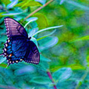 Blue Butterfly Fantasy Poster