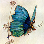 Blue Butterfly II Poster by Warwick Goble