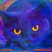 Blue Cat Ponders Poster