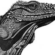 Blue Cayman Iguana Poster