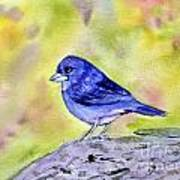 Blue Chaffinch Poster