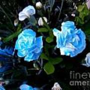 Blue Carnations Poster