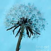 Blue Dandelion Wish Poster