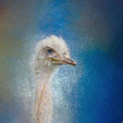 Blue Eyed Beauty - White Ostrich - Wildlife Poster
