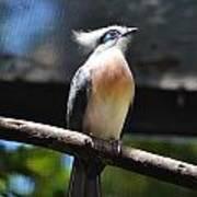 Blue Eyed Bird Poster