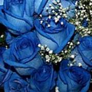 Blue Fire And Ice Roses Poster