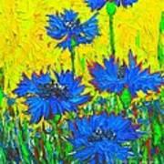 Blue Flowers - Wild Cornflowers In Sunlight  Poster