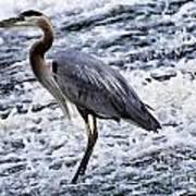 Blue Heron Fishing V3 Poster