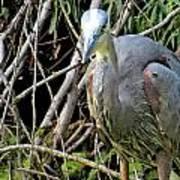 Blue Heron Greeting Poster