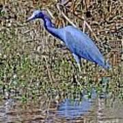 Blue Heron Louisiana Poster