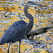 Blue Heron Naturally Poster