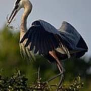 Blue Heron Wing Tips Poster
