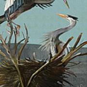 Blue Herons Poster