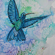 Blue Hummingbird In Flight Poster by M C Sturman