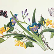Blue Iris And Insects Poster