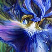 Blue Iris Poster by Lynette Yencho