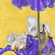 Blue Iris On Gold Poster