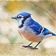 Blue Jay - Digtial Paint Poster