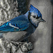 Blue Jay Painterly Poster