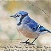 Blue Jay With Verse Poster