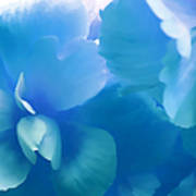 Blue Melody Begonia Floral Poster by Jennie Marie Schell