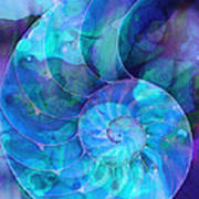 Blue Nautilus Shell By Sharon Cummings Poster