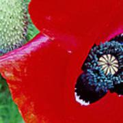 Blue Opium Poster