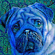 Blue Pug Poster