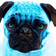 Blue - Pug Pop Art By Sharon Cummings Poster