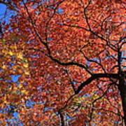 Blue Ridge Mountains Fall Foliage Poster