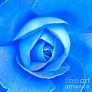 Blue Rose Macro Shot Poster