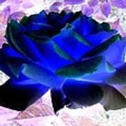 Blue Rose Poster