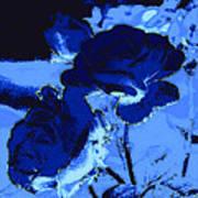 Blue Roses Poster