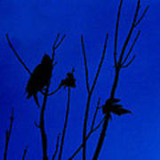 Blue Silhouette Poster by Julie Cameron
