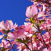 Blue Sky Art Prints Pink Dogwood Flowers Poster