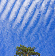 Blue Sky White Clouds Green Trees Poster