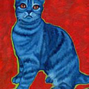Blue Tabby Poster